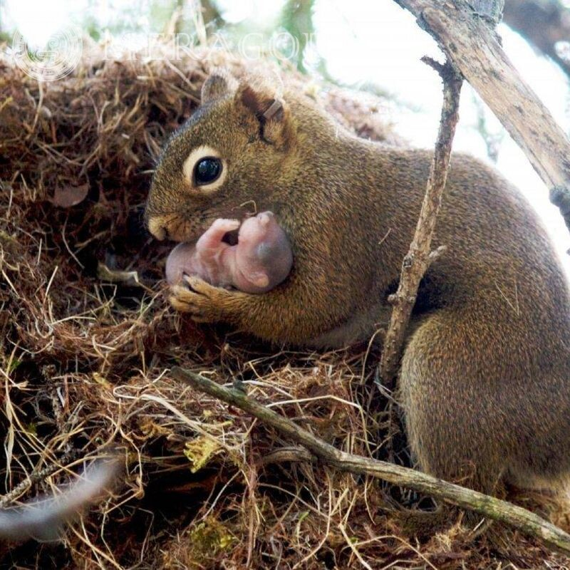 Beautiful photos of squirrels and little squirrels
